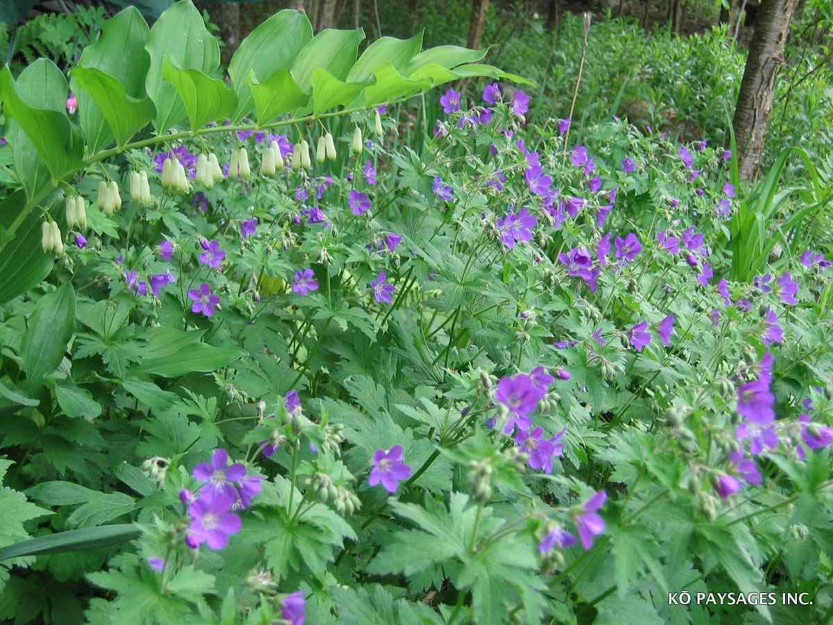 Plantes couvre sol k paysages for Plante couvre sol